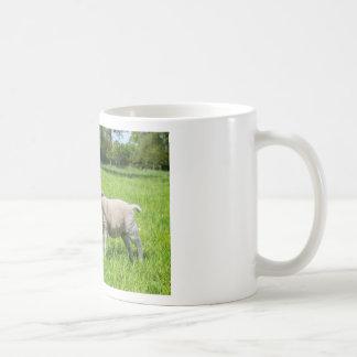 Caneca De Café Dois carneiros holandeses brancos no prado verde