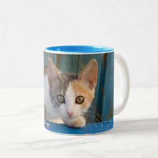 Caneca De Café Em Dois Tons Foto curiosa engraçada dos olhos do gatinho bonito