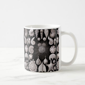 Caneca De Café Ernst Haeckel Thalamophora mim