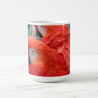 Caneca De Café Escarlate do Macaw