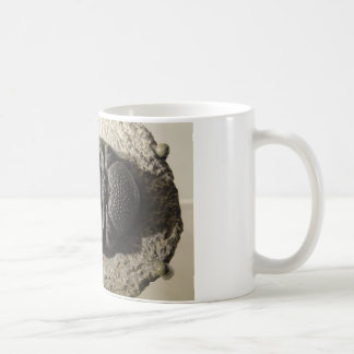 Caneca De Café Foto bonita do fóssil do trilobite de Phacops