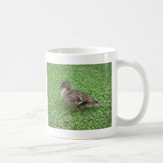 Caneca De Café Foto da fêmea do pato do pato selvagem