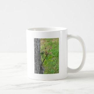 Caneca De Café Galho da árvore de pera com os botões no primavera