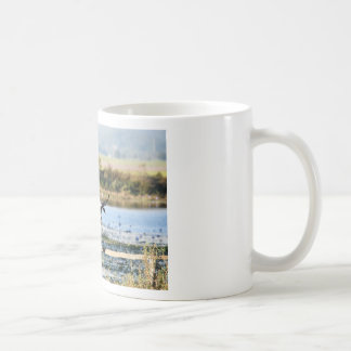 CANECA DE CAFÉ GANSOS QUEENSLAND RURAL AUSTRÁLIA DO MAGPIE