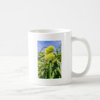 Caneca De Café Husks do verde e folhas da árvore de castanha