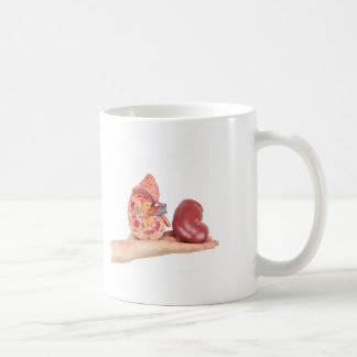 Caneca De Café Mão lisa que mostra o rim humano modelo