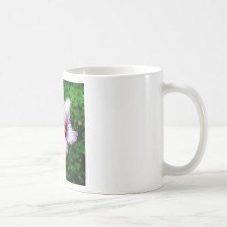 Caneca De Café Mug/Tasse Hibiscus