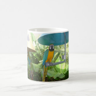 Caneca De Café Papagaio bonito