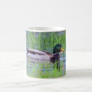 Caneca De Café Pato masculino do pato selvagem que flutua na água