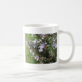 Caneca De Café Planta de Rosemary com as flores em Toscânia,