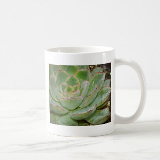 Caneca De Café Planta do Succulent