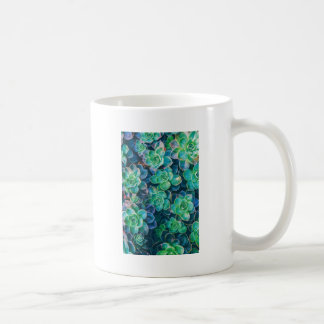 Caneca De Café Succulents, Succulent, cacto, cactos, verde,