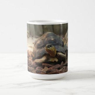 Caneca De Café Tartaruga da terra