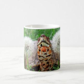 Caneca De Café Tartaruga de caixa colorida