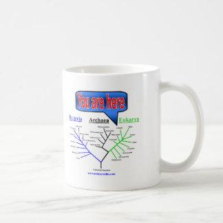 """Caneca De Café """"Você está aqui"""" árvore evolucionária"""