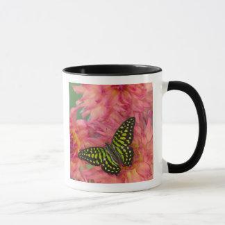 Caneca Fotografia de Sammamish Washington da borboleta em