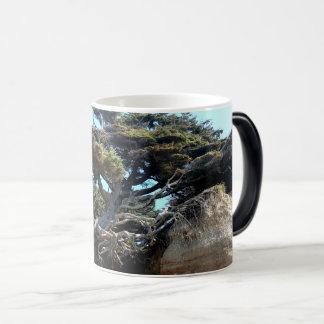 Caneca Mágica A árvore Windswept da costa de Washington da vida