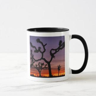 Caneca NA, EUA, Califórnia. Nacional da árvore de Joshua