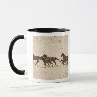 Caneca Namíbia, Aus. Grupo de funcionar cavalos selvagens