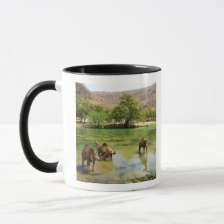 Caneca Oman, darbat do barranco, dromedaries que pastam