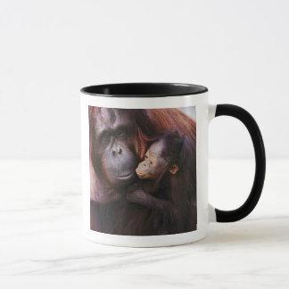 Caneca Orangotango fêmea de Sumatran com bebê, Pongo