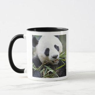 Caneca Panda que come os tiros de bambu Alluropoda 2