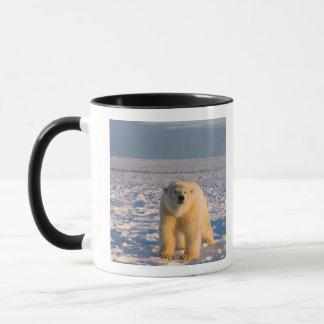 Caneca urso polar, maritimus do Ursus, no gelo e na neve,