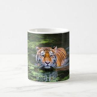 Canecas da natação do tigre