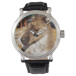 Canguru australiano sonolento, relógio do couro