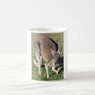 Canguru insolente - caneca