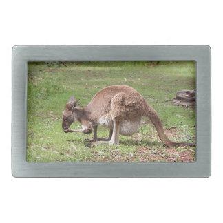 Canguru, interior Austrália
