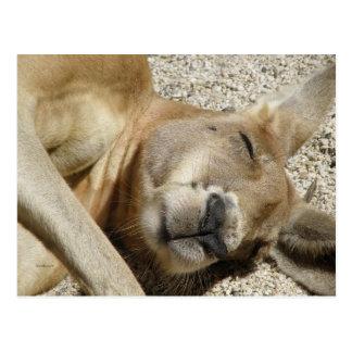 Canguru QLD Austrália do sono do cartão