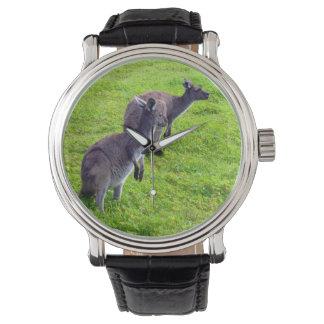 Cangurus cinzentos na grama verde, relógio do