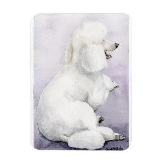 Caniche branca que coloca o ímã da arte do cão