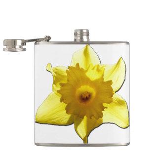 Cantil Daffodil 1,0 da trombeta amarela