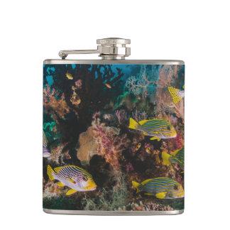 Cantil Garrafa do recife de corais
