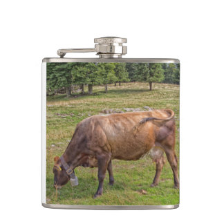 Cantil vaca que come em um prado