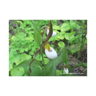 """Canvas 20"""" da orquídea de senhora deslizador da"""