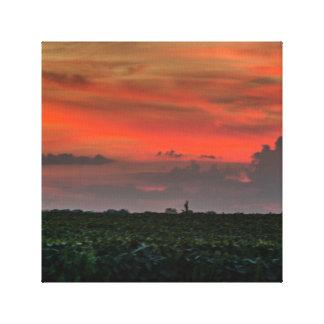 Canvas bonitas dos campos de milho do por do sol