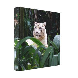 Canvas brancas do tigre impressão de canvas esticadas