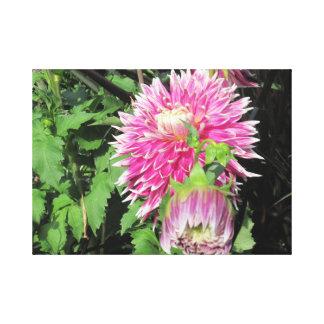 Canvas cor-de-rosa do crisântemo impressão de canvas esticada