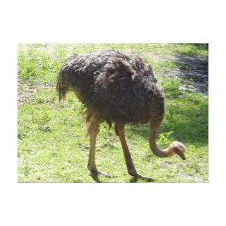 Canvas da avestruz