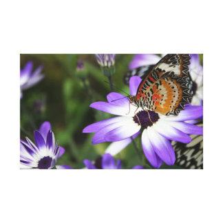 Canvas da borboleta