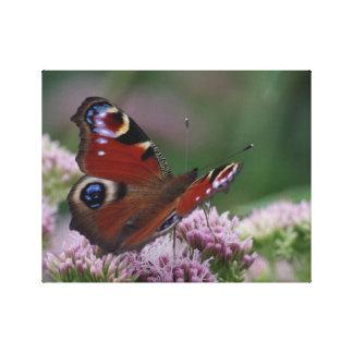 Canvas da borboleta de pavão