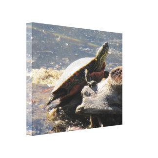 Canvas da tartaruga