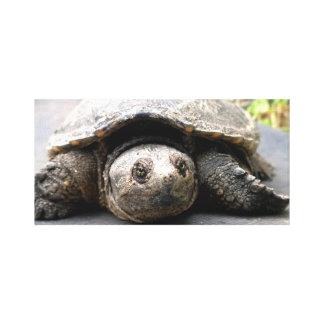 Canvas da tartaruga de agarramento