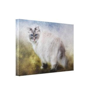 Canvas de belas artes do gato de Ragdoll