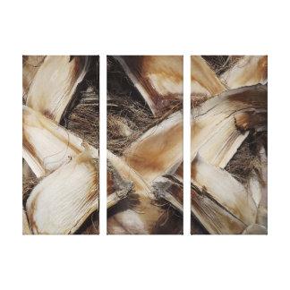 Canvas de madeira da foto da grão do Husk da palma