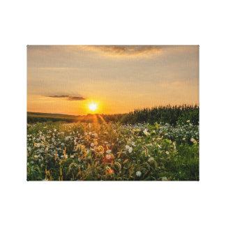 Canvas do campo dos Wildflowers do por do sol de