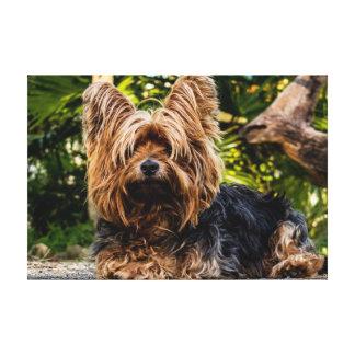 Canvas do cão de Yorkie